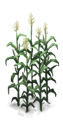 WildCorn.png